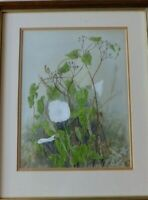 Old Botanical Watercolour Painting Bindweed Calystegia Sepium  Heather Smith