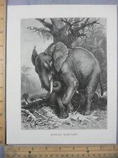 Rare Antique Original VTG African Elephant Specht Illustration Art Print