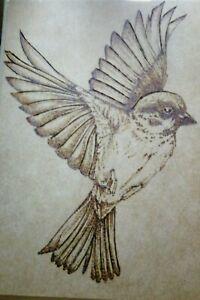 © ART - Sparrow Bird Nature Wildlife wood burning pyrograph drawing by Di