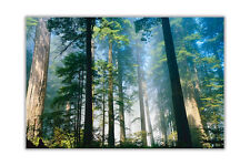 Forest With Tall Trees Landscape Poster Prints Wall Art Decoration Pictures