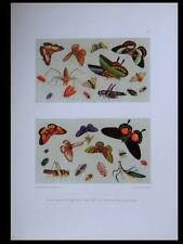 INSECTES, PAPILLONS -1925- PHOTOLITHOGRAPHIE, CHINE
