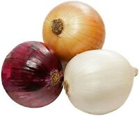 100Pcs Sweet Onion Vegetable Seeds Ordinary 3 Kind Eat Organic Kitchen-Garden