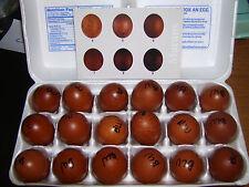 10+ BLUE MARANS - Show Quality Hatching Eggs