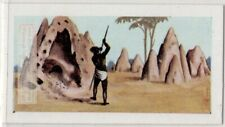 Termite White Ant Termes bellicosus Hill Africa Vintage Trade Ad Card