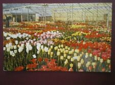 POSTCARD LINCOLNSHIRE SPALDING - SPRINGFIELDS GREENHOUSES C1968