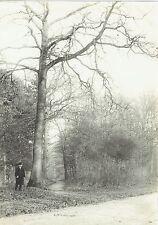 Photographie : Bois de Vincennes , croisée de chemins , vers 1905