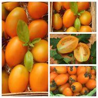 Orange Banana orange Tomate aus Russland Massenträger russische Tomate Freiland