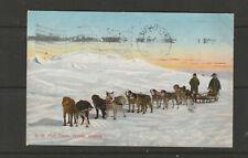 POST CARD USPS dog team mail alaska 1909FREE SHIPPING