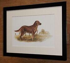 Golden Retriever print -12''x16'' frame - Joel Kirk prints, joel kirk dog print