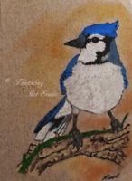 ACEO Blue Jay Bird Animal Wildlife Original Artwork Art Card Signed by Artist