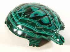 Malachite Turtle (Zaire) M252