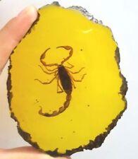 Beautiful amber scorpion fossil insects manual polishing+++