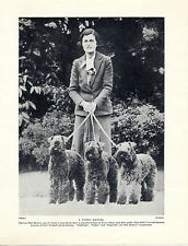 KERRY BLUE TERRIER LADY OWNER AND DOGS OLD ORIGINAL DOG PRINT FROM 1934