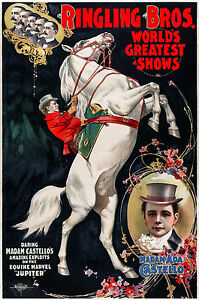 Ringling Bros Circus Horse 1899, Old Vintage Antique, Magic, HD Print or Canvas