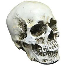 Human Realistic Spooky Skull Head Resin Halloween Haunt Stage Prop Decorations