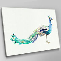 A635 Blue Teal Peacock Paint Stroke  Canvas Wall Art Animal Picture Large Print