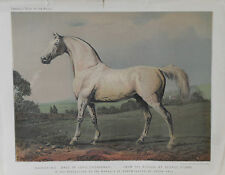 1876 Antique Cassell's HORSE Print MAMBRINO - Lord Grosvenor - Chromolithograph