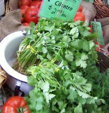 cilantro, CORIANDER, CHINESE PARSLEY herb, 45 SEEDS! GroCo