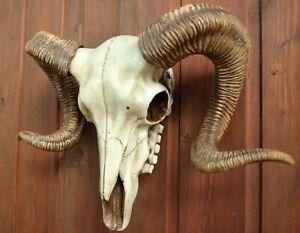 Widderschädel Replik zum hängen Geweih aus Kunststein 33 cm Trophäe Totenschädel