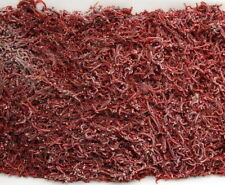 750g of Freshly Frozen Bloodworm - Perfect Fish Food