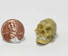 Dollhouse Miniature Resin 1:12 Scale Human Skull by Falcon Miniatures