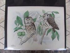 Original  Rex Brasher #371  Hand Colored Bird Print  Richardson Owl #371REX2 DSS