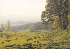 Cotswold Sheep Pastures Field Landscape