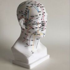 Human Head Acupuncture Point Massage Model Teaching Education Tool