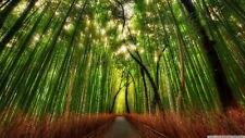 121636 Green Forest Rain Jungle Mountains Decor LAMINATED POSTER AU