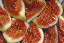 10 DESERT KING FIG CUTTINGS. HARDY TREE. LARGE, SWEET FRUIT