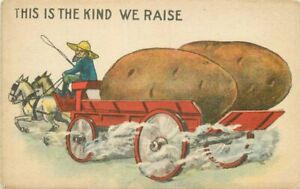 Artist impression C-1910 Farm Agriculture Potato Exaggeration Postcard 21-1801