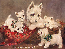WEST HIGHLAND WHITE TERRIER WESTIE DOG GREETINGS NOTE CARD MUM AND FOUR PUPPIES
