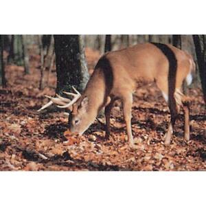 Delta Mckenzie Tru-Life Paper Target Feeding Deer