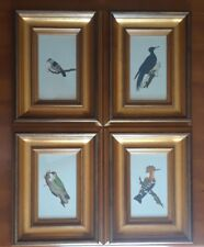 Edward Donovan Birds - MANUSCRIPT INK DRAWINGS - WATERCOLOUR - Circa 1799