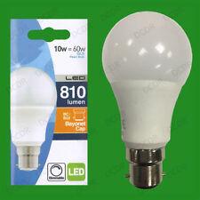 Standard 220V 10W Light Bulbs