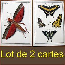 Lot 2 cartes criquet papillon encadrement entomologie