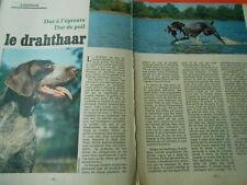 1980 Coupure de Presse Clipping Chasse Chien Le Drahthaar