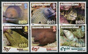 Ascension Island Fish Stamps 2017 MNH Eels Moray Eel Fishes Marine 6v Set