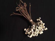 Dried Primitive Tallow Berry Bundles 30 Plus Stems Berries/ Decor