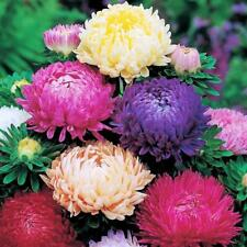 Seeds Aster King Size Mix Outdoor Annual Garden Cut Organic Heirloom Ukraine
