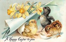 Cute Chicks With Daffodils & Paper Pinned Back-Old Tuck Easter Postcard-No. 112