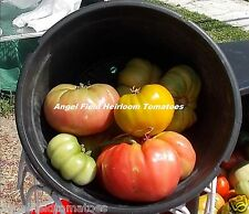 New listing 50 Large Mixed Historical Heirloom Tomato Seeds for Farms & Garden