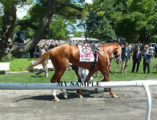 MY MISS SOPHIA 8 by 10 PHOTO 2014 THE ACORN Horse Race BELMONT PARK #2