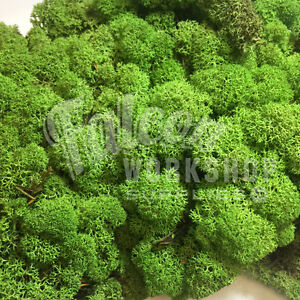 DARK GREEN BEST QUALITY REINDEER MOSS - CHRISTMAS CRAFT DOOR WREATH FLORIST