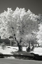 Canon EOS 400D DSLR 720nm IR Infrared converted camera