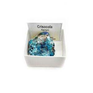 Crisocola Piedra Natural Semipreciosa 3-4 cm en caja de colección