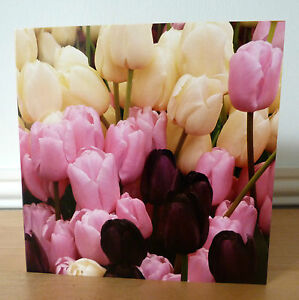 Blank Greetings Cards Flower Birthday Notelet All Occasions Tulips Pink Purple