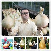 Giant Garlic Bonsai Seeds Plants Organic Onion Vegetable Kitchen 100pcs