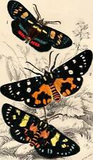 1897 Antique Butterfly Print exquisite Chromolithograph Book Plate
