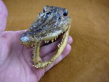 """G-Def-295) 4-1/8"""" unusual Deformed Gator ALLIGATOR Aligator HEAD teeth TAXIDERMY"""